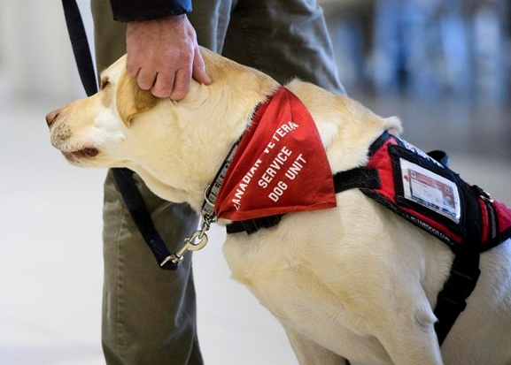 Canadian Veterans Service Dog Unit